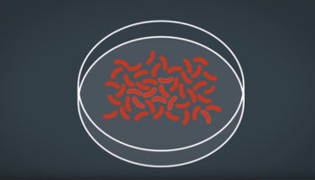 Microbes in the Food Chain