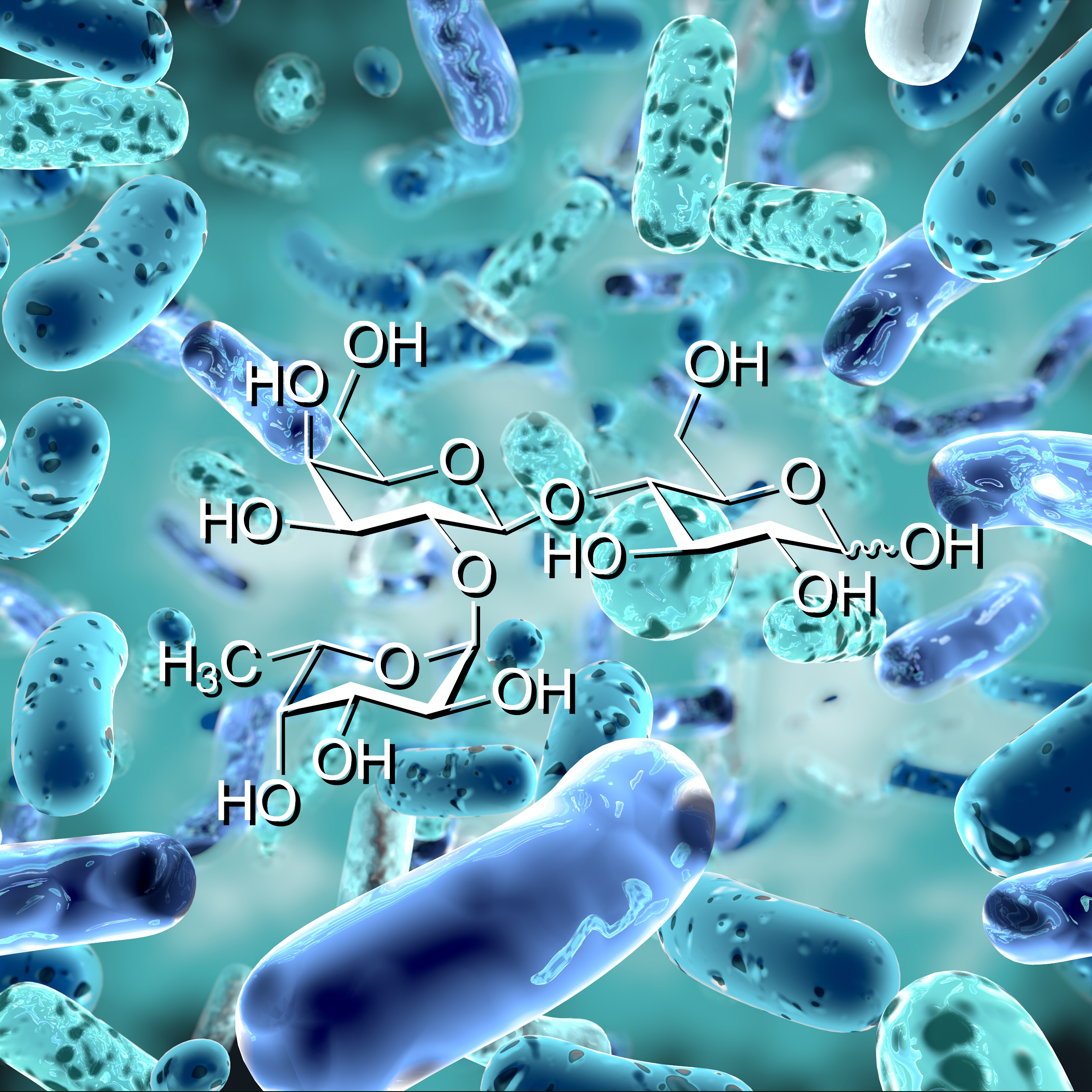 Human milk oligosaccharide structure over bifidobacterium