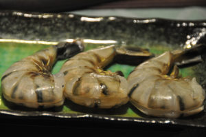prawns used in the survey for Vibrio bacteria
